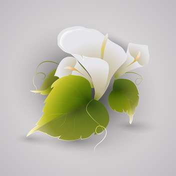 Vector illustration of white calla flowers with green leaves on grey background - бесплатный vector #126601