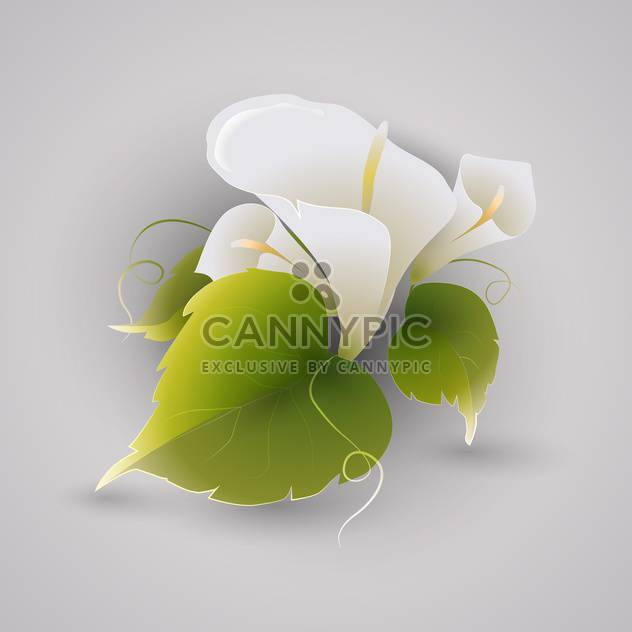 Vector illustration of white calla flowers with green leaves on grey background - Free vector #126601
