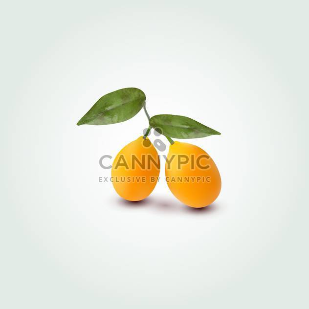 Vector illustration of two orange apricots on green background - Free vector #129821