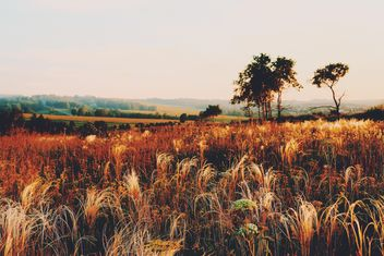 Field of spikelets at sunset - Free image #136181