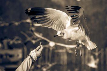 Woman feeding seagull - image #136351 gratis