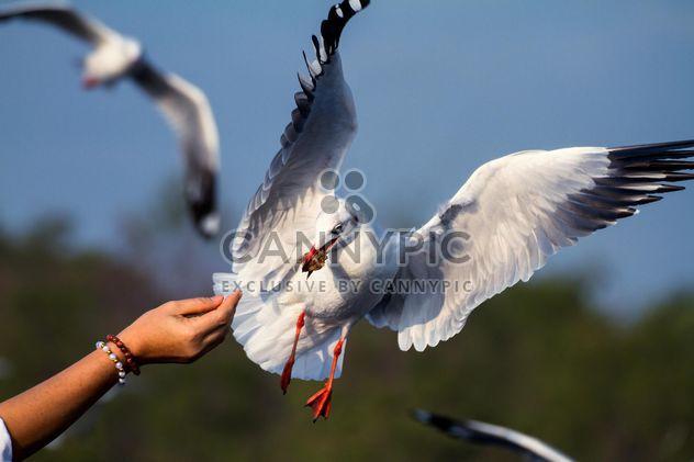 Девушка в руку кормления Чайка - бесплатный image #136361