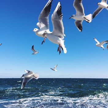 Flying seagulls - image gratuit #136411
