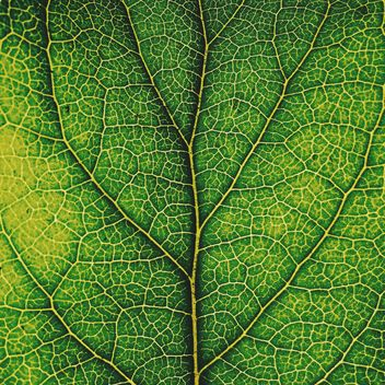 Green leaf texture - Kostenloses image #136471