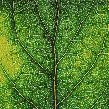 Green leaf texture - image #136471 gratis