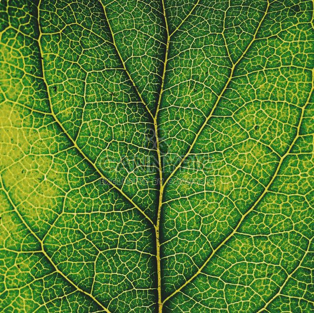 Green leaf texture - Free image #136471