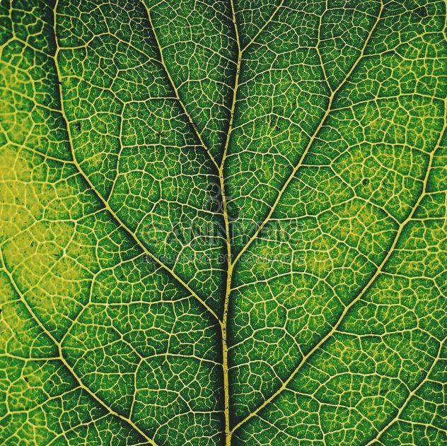 Texture de la feuille verte - image gratuit #136471