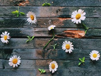 Daisies on wooden background - бесплатный image #136601