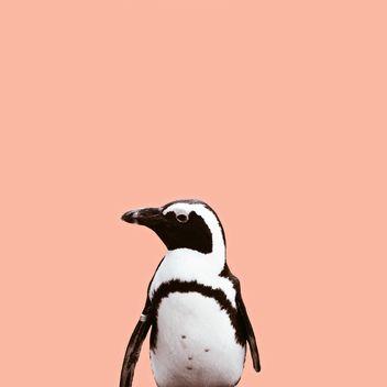 cutie penguin - image gratuit #136611