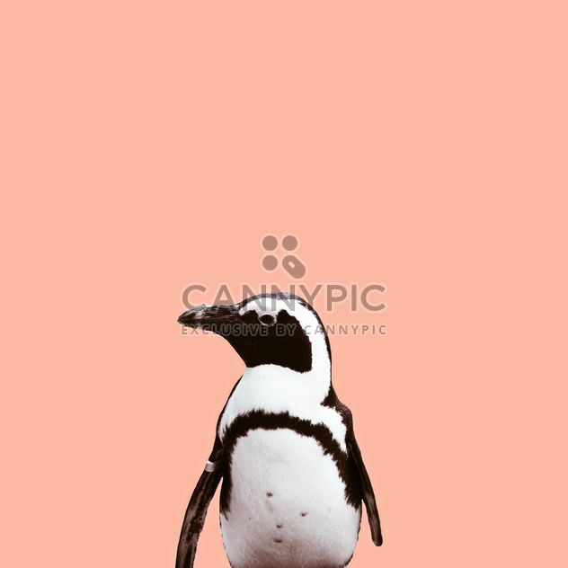 pinguim bonitinho - Free image #136611