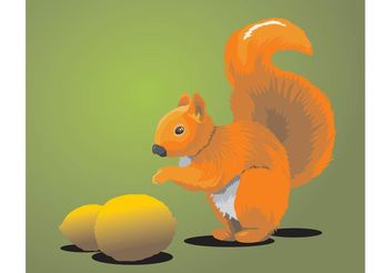 Squirrel - vector gratuit #141421