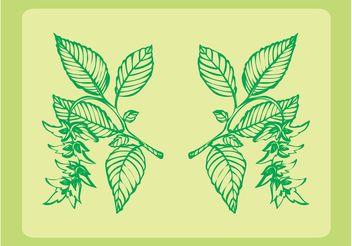 Fresh Plants Ornaments - Free vector #143311