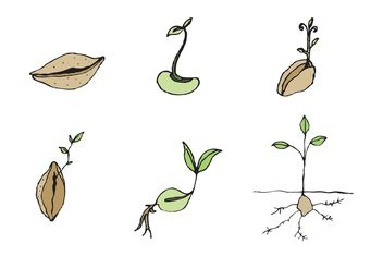 Free Seed Vector Series - Kostenloses vector #146611