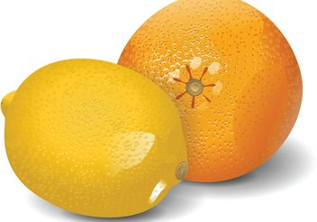 Lemon & Orange Vector - vector gratuit #147511