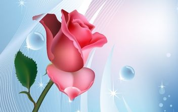 Rose on blue background with water bubbles - vector gratuit #169871