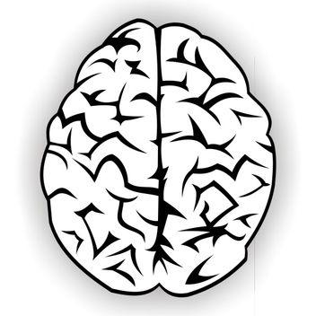 Brain vector free - Free vector #173541