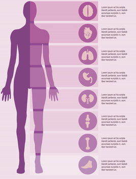 Female body infographics elements - vector gratuit(e) #179851