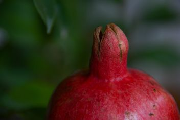 Pomegranate close up - image #182781 gratis
