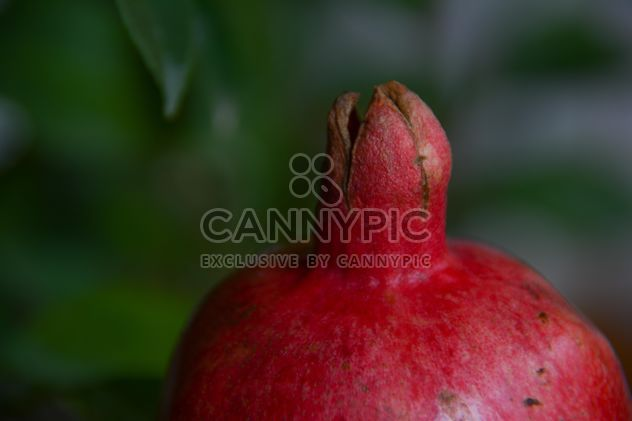 Pomegranate close up - Free image #182781