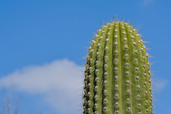 Very big cactus - Free image #182841