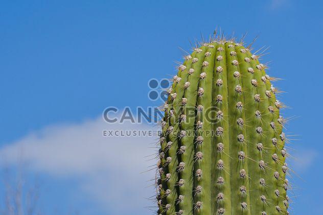 Cactus muy grandes - image #182841 gratis