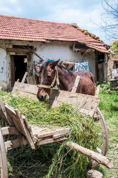 Horse eating from wooden cart - image #182931 gratis