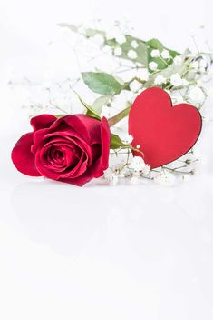 Red rose and heart - image gratuit(e) #182991