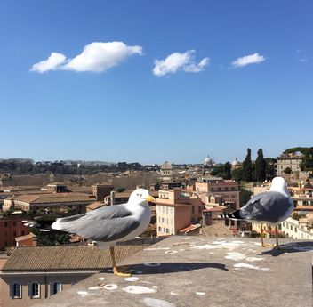 seagulls on roof - image gratuit #183091
