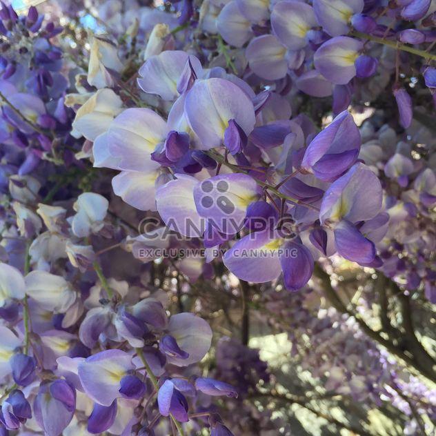 фиолетовые цветы - бесплатный image #183141