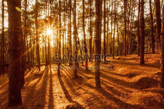Luces de amanecer a través de la niebla - image #183481 gratis