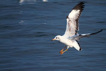 Flying seagull - image #183541 gratis