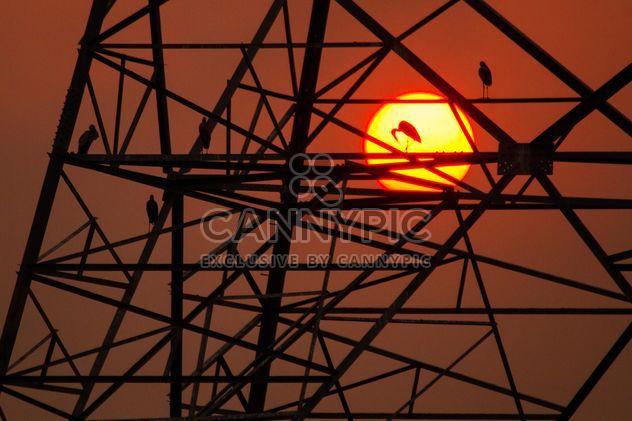 Oiseaux sur les constructions de lignes à haute tension - Free image #183561