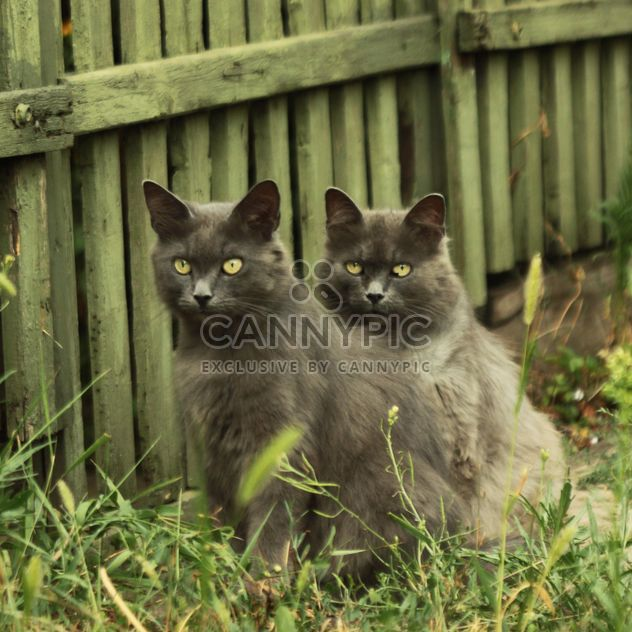 Two gray cats near wooden fence - Free image #183751