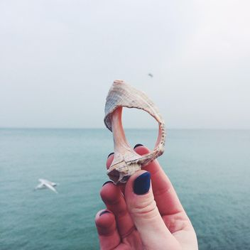 Seashell on the background of the sea - бесплатный image #184121