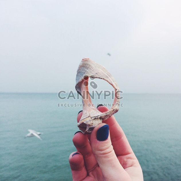Seashell on the background of the sea - Free image #184121