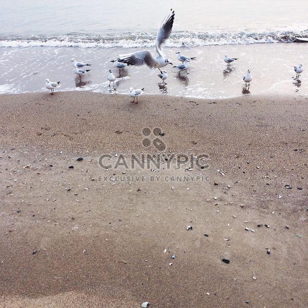 море - бесплатный image #184211