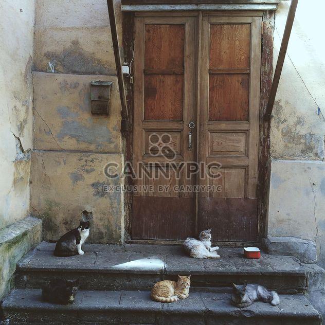 Cinco gatos na frente da porta - Free image #184591