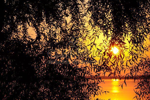Baum vor Sonnenuntergang - Kostenloses image #185711