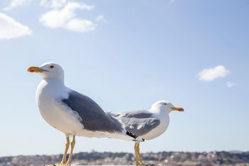 Two seagulls - Free image #185931