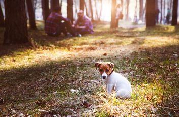 Small puppy in forest - Free image #186191
