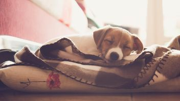 Cute sleeping puppy - Free image #186291