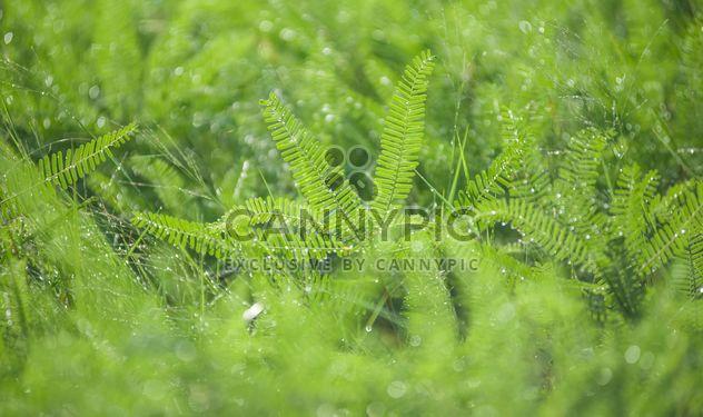 rosée sur macro d'herbe - image gratuit #186331