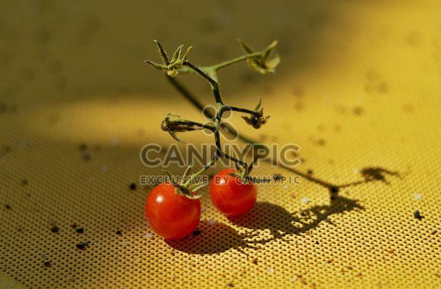 Tomates cherry maduros - image #186701 gratis