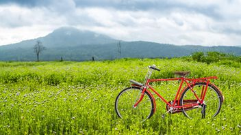 Red bicycle on a green meadow - image #186931 gratis