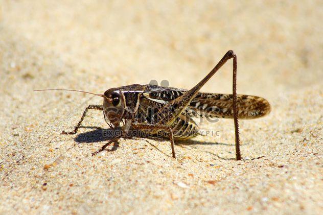 Close-up de gafanhoto na areia - Free image #187761