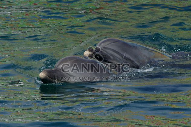 Dolphins in dolphinarium pool - Free image #187771