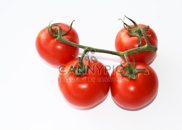 Tomatoes on branch - Free image #187811