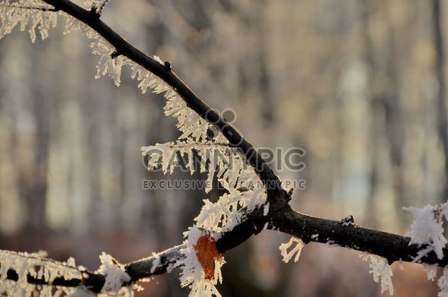 Tree branch with hoar frost - Free image #198151