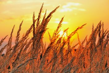 Grass in the sunset light - image #198171 gratis