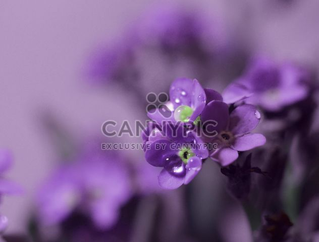 Small purple flowers - Free image #198211